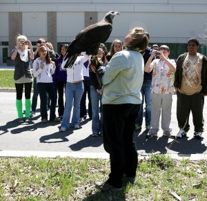 Raptor Specialist Francie Krawcke handles the bald eagle from the Leslie Science and Nature Center while visiting Skyline High School.