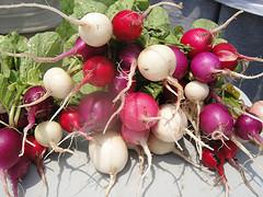 Tappan garden radishes