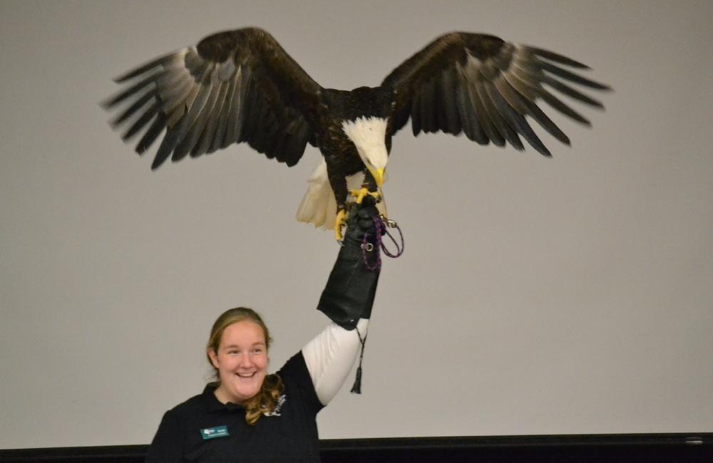 Sarah Gilmore from the Leslie Science and Nature Center shows off a bald eagle at Wines Elementary Nov. 1, 2013.