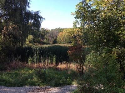 Thurston Pond