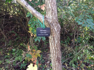 Tree labeling at Thurston Nature Center