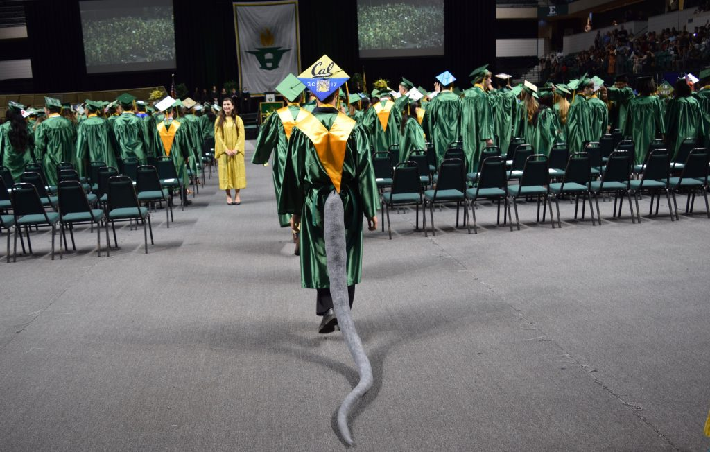 A graduate in cap and gown with a long grey tail